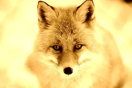 精神病は動物霊の憑依?