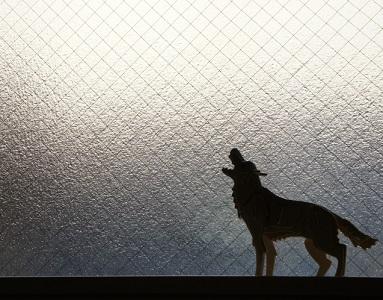 ペットの犬が死ぬ前に吠えたのは何かのメッセージ?