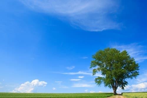 人は自然の気を吸収する