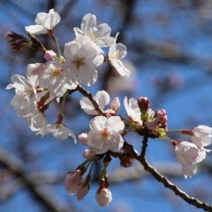 春分の日の過ごし方