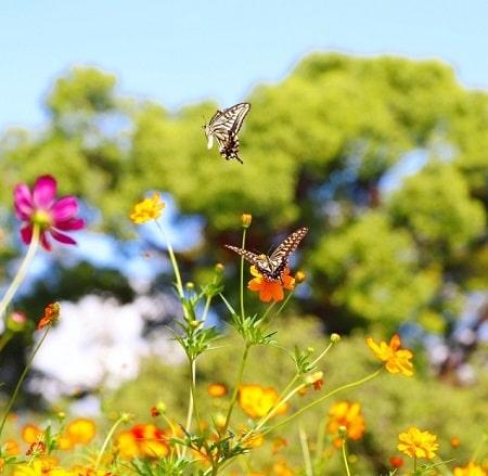 今日は清明の日。鳥は歌い、蝶は舞い踊る極楽の日が始まる