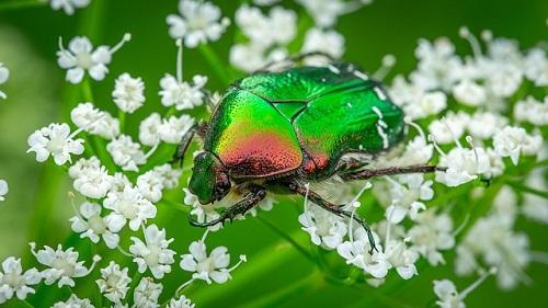 昆虫は元々スピリチュアルな生き物