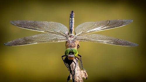 虫、鳥、蝶、トンボ、バッタのスピリチュアルメッセージ