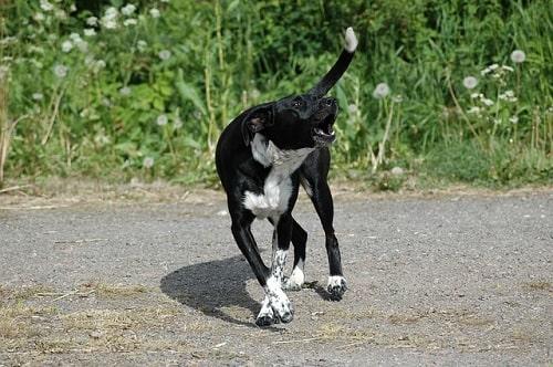犬は霊を見る!何もない所に向かって犬が吠える理由
